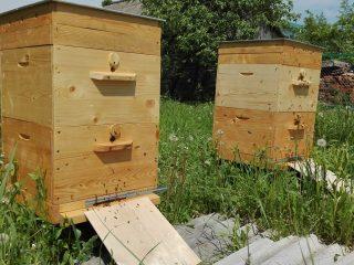 Воровство у пчел