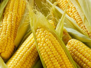Как заморозить кукурузу на зиму в початках