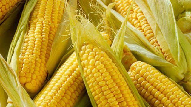Замороженная кукуруза на зиму в початках и зернах