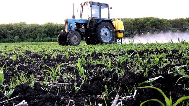 Гербициды для кукурузы применение и эффективность