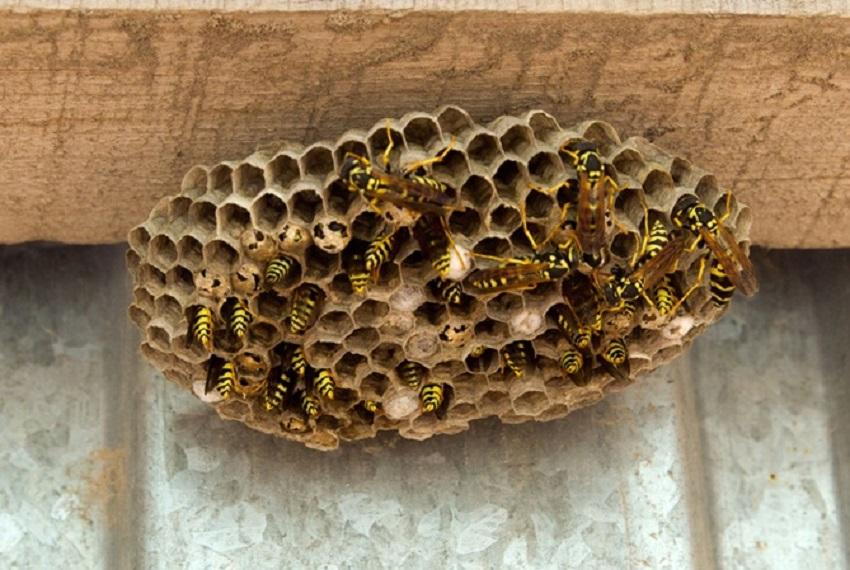 Какие запахи не любят пчелы
