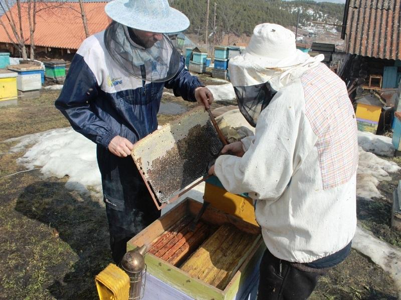 Календарь пчеловода: работа на пасеке в январе