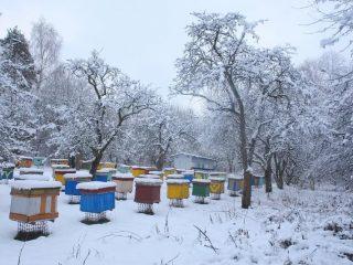 Сколько меда оставлять пчелам на зиму