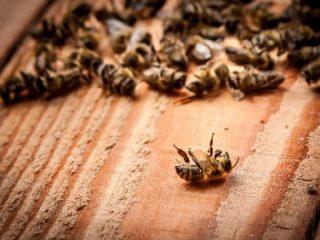 Болезни пчел: их признаки и лечение