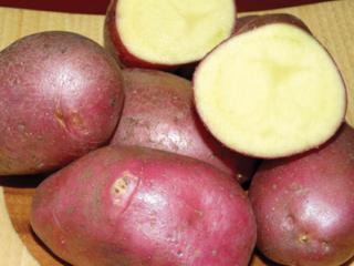 Картофель Дева: описание сорта, отзывы