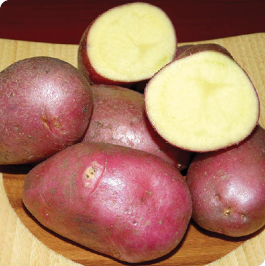 картофель каменский описание сорта фото стихи подарку деньги