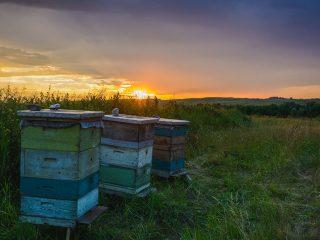 Пчелы осенью