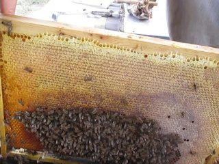 Формирование гнезда и подготовка пчел к зимовке