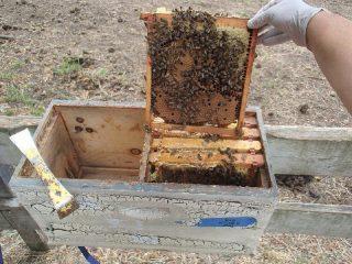 Как устроен улей для пчел