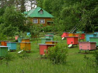 Пчеловодство для начинающих: с чего начать
