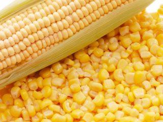 Уборка и технология выращивания кукурузы на силос