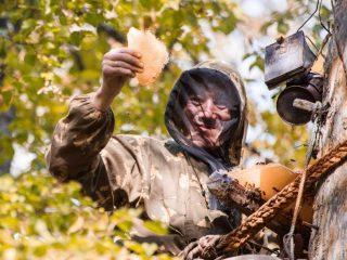 Как пчеловоды собирают мед