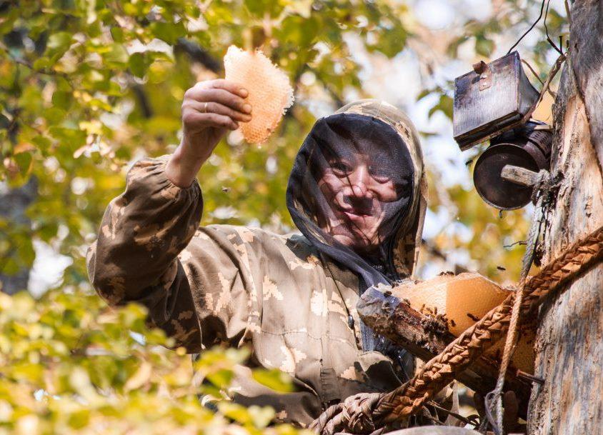 Полезные свойства дикого меда, как добыть мед диких пчел