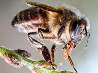 Пчела: фото + интересные факты