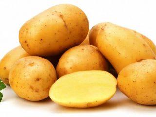 Сорт картофеля Ласунок