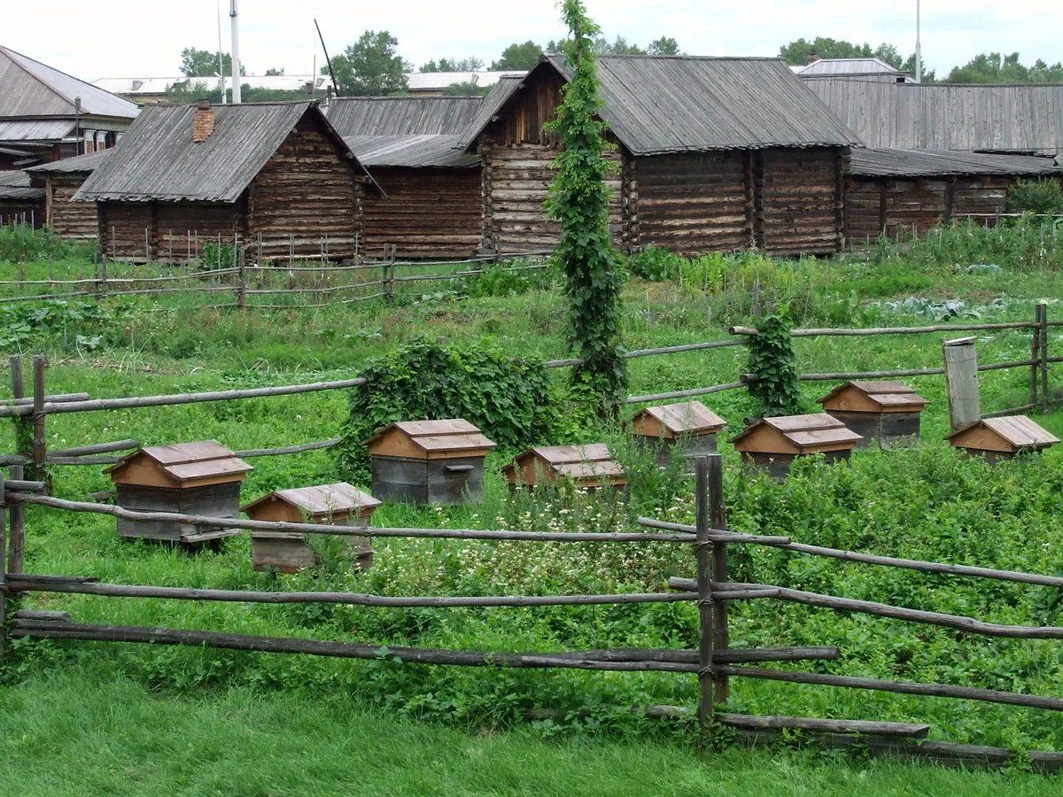 Пасека в деревне фото