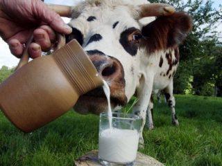 Ветеринарные правила при бруцеллезе животных