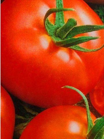 Сорт томата альфа