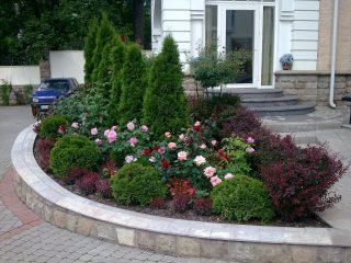 Розы с хвойниками в ландшафте
