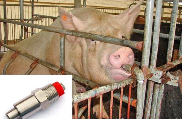 Поилки для свиней и поросят виды, ниппельная, автопоилка, чашечная
