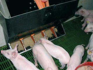 Корыто для свиней и поросят