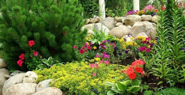 Цветники с хвойниками и многолетниками