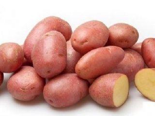 Сорт картофеля Кумач