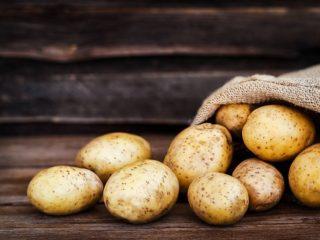 Картофель сорта Лорх: отзывы и характеристика