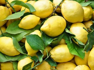 Сорта и виды лимонов для домашнего выращивания