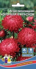 Цветы Астра пионовидная Королева В Красном