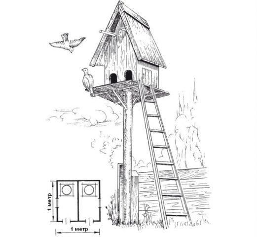 Голубятня и гнезда для голубей своими руками чертежи, фото и видео