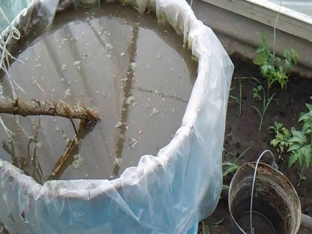 Голубиный помет в качестве удобрения как использовать и разводить, отзывы
