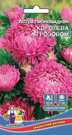 Цветы Астра пионовидная Королева в Розовом