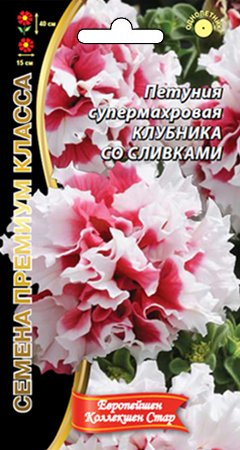 Цветы Петуния Клубника Со Сливками