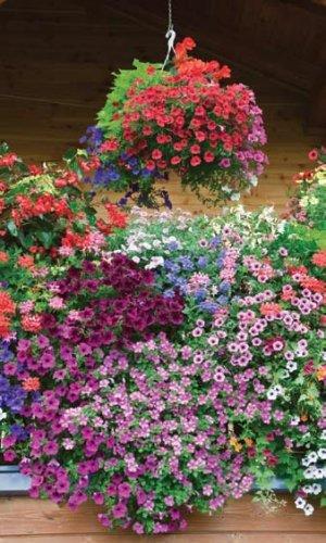 Цветы Петуния Балконная Смесь F2