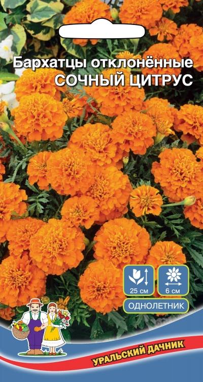 Цветы Бархатцы отклоненные Сочный Цитрус