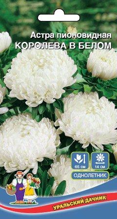 Цветы Астра пионовидная Королева в Белом