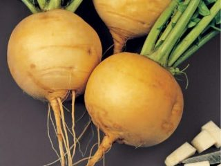 Чем полезна репа для организма человека: состав, калорийность сырой, вареной, тушеной