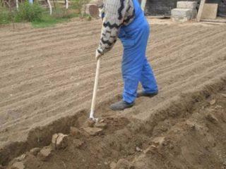 Как вскопать землю вручную: лопатой, быстро, легко, чудо-лопатой, весной, осенью, фото, видео