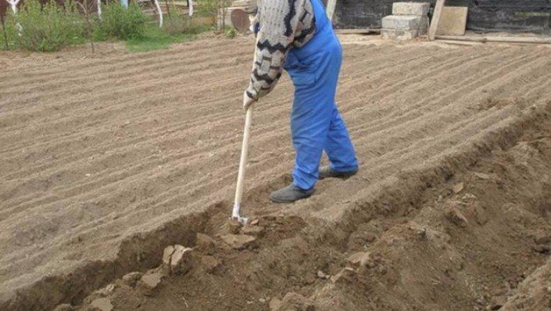 Как быстро вскопать целину лопатой