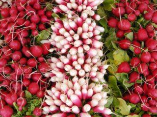 Семена редиса: лучшие сорта для открытого грунта, для Подмосковья, для Сибири, для регионов