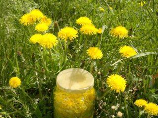 Настойка одуванчика на водке (спирту, одеколоне): применение при болезнях