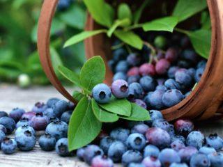 Чем полезна голубика: калорийность, содержание БЖУ, витаминов, гликемический индекс, польза и вред при беременности, при грудном вскармливании