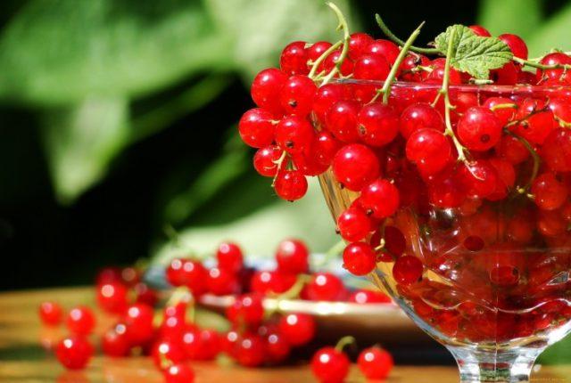 Польза и вред красной смородины для организма человека