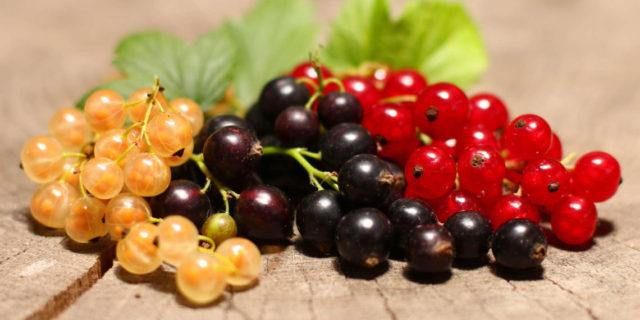 Замороженная черная и красная смородина полезные свойства, вред