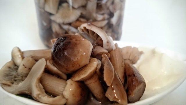 Замораживаем волнушки на зиму можно ли и как правильно заморозить сырые, отварные грибы, можно ли