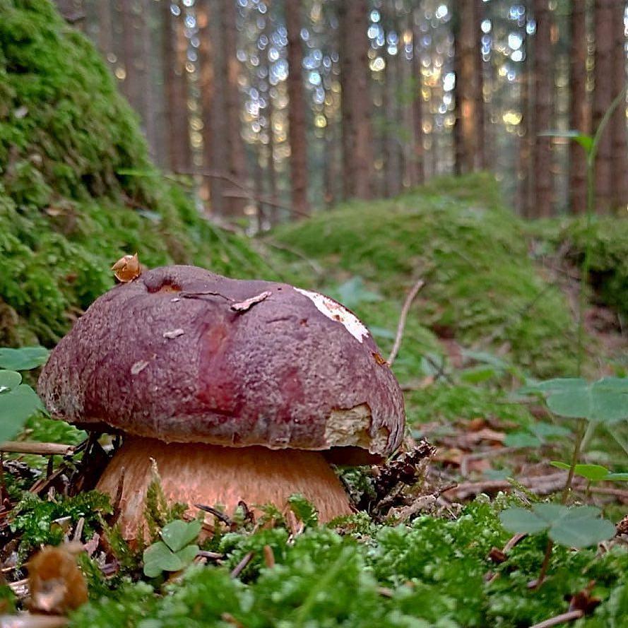 родился самого как растут белые грибы фото нашли что искали