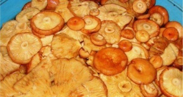 Жареные волнушки в сметане как приготовить на сковороде с луком, сметанным соусом