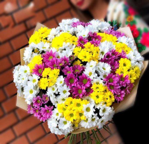 Как вырастить хризантемы из букета цветов? Описание