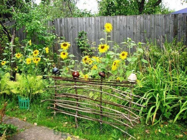 Цель выращивания декоративного подсолнуха в открытом грунте